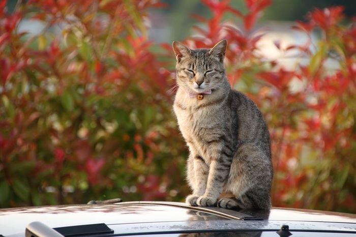 おとなりさん ねこ One Animal Mammal Animal Themes Animal Cat Vertebrate Feline