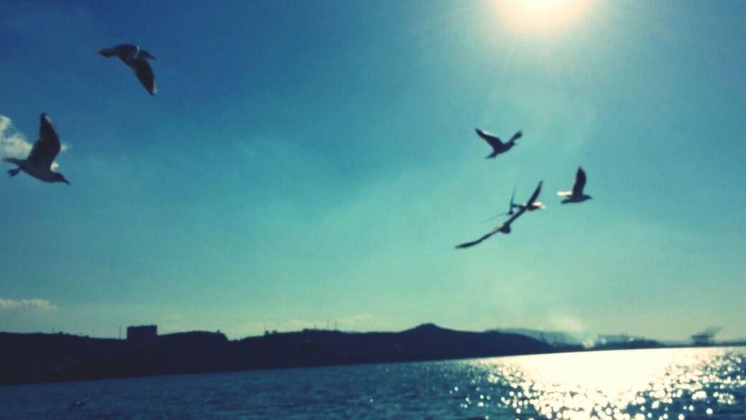 Sea Sun Natural Nature Birds Fly