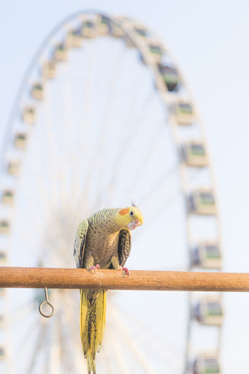 Low angle view of bird perching on metal railing