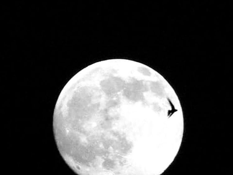 Moon Full Moon Night Sky Bird Fly