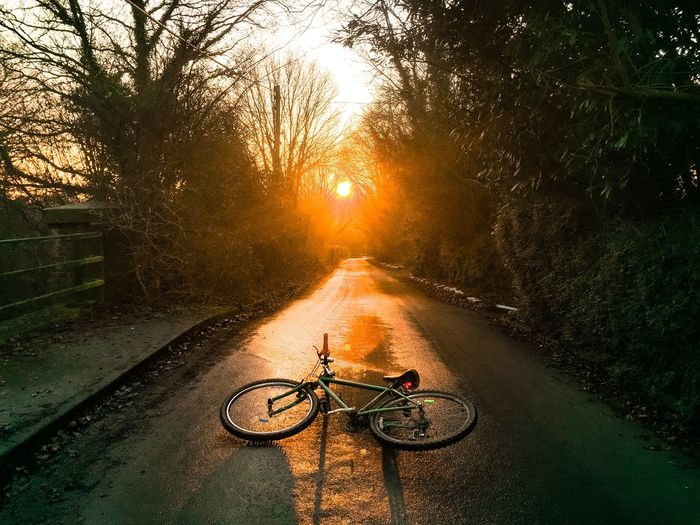 Traveling Home For The Holidays Shadows & Lights Sunset Tree Bicycle Sun Transportation Sunlight Lens Flare Mode Of Transport Outdoors Cycling Nature The Way Forward Road Land Vehicle Building Exterior Sunbeam Branch Water No People Sky High Contrast Long Road Home Warm