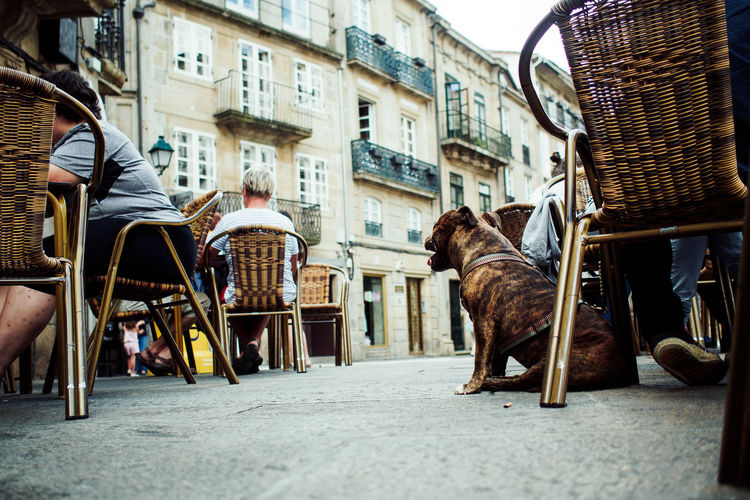 Dog Sitting By Chair At Sidewalk Cafe In City