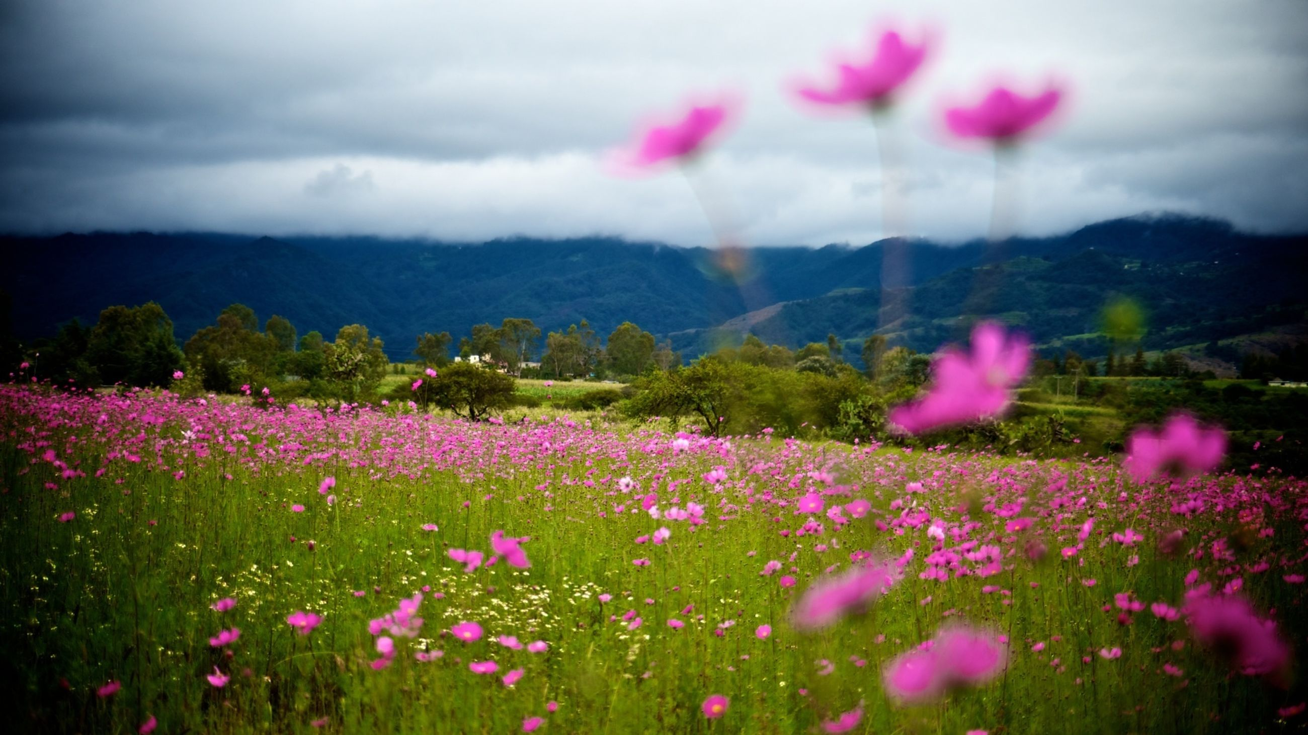 flower, beauty in nature, growth, sky, mountain, freshness, landscape, fragility, nature, field, tranquil scene, plant, cloud - sky, scenics, tranquility, blooming, pink color, petal, in bloom, mountain range