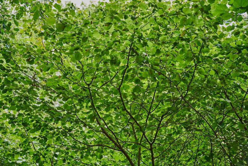 Day Foliage Forest Green Green Color Italy Lazio Monterano Nature No People Outdoors Tuscia