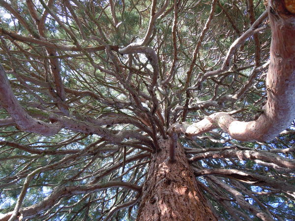 Beautiful Beauty In Nature Branch Branch Of A Tree Diffuse Growth Muddled Nature Nice Outdoor Outdoors Outdoors Photograpghy  Pine Pine Tree Pinewood Stick Tangle Tranquility Tree Up WoodLand