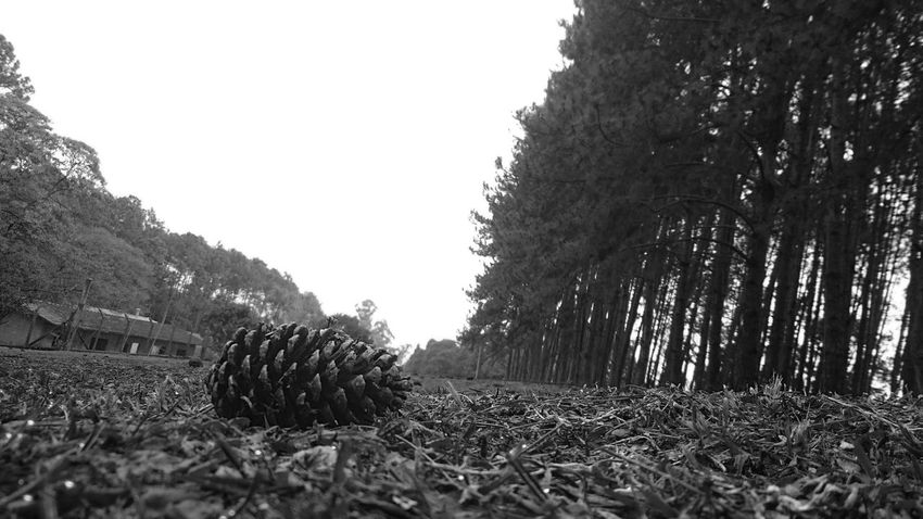 Eye4photography  Change Your Perspective The Pursuit Of Happiness Black And White Blackandwhitephotography Beautiful Earth Blackandwhite Eyem Nature Lovers  Connected With Nature EyeEm Nature Lover