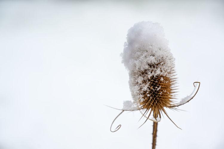 Close-up of white dandelion flower against sky