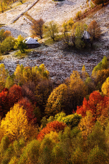 High angle view of plants and trees during autumn