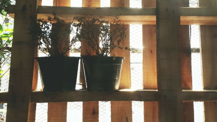 Light Plant Dead Pot Window Shadow Indoors  Built Structure Architecture Wooden Plank Old Day Alone Calm Peace Quiet Ecology Eco