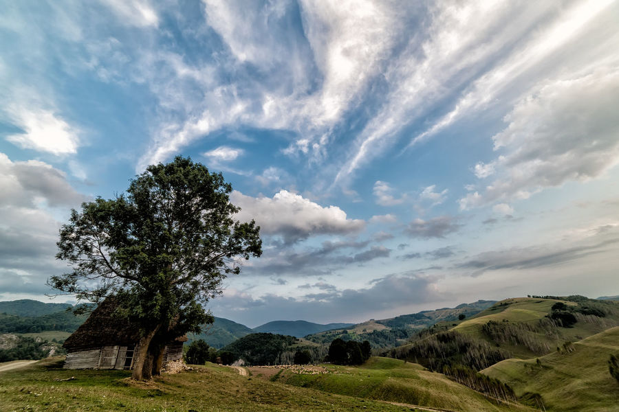 Bright Colors Field Grass Green Color Hills Morning Natural Road Sunny Blue Countryside Foggy Forest Horizon Landscape Meadow Misty Morning Mountain Old House Outdoors Rural Scene Scenics - Nature Sky Travel Destinations Tree
