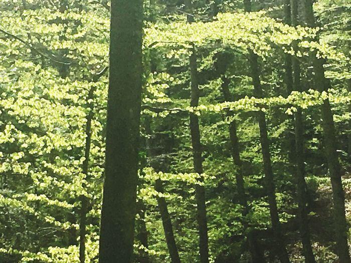 Green Color Nature Forest Springtime Tree Outdoors EyeEm Best Edits EyeEm Masterclass Eye Em Nature Lover Landscape_photography Germany Photos Official EyeEm © No People Sunlight EyeEm Gallery