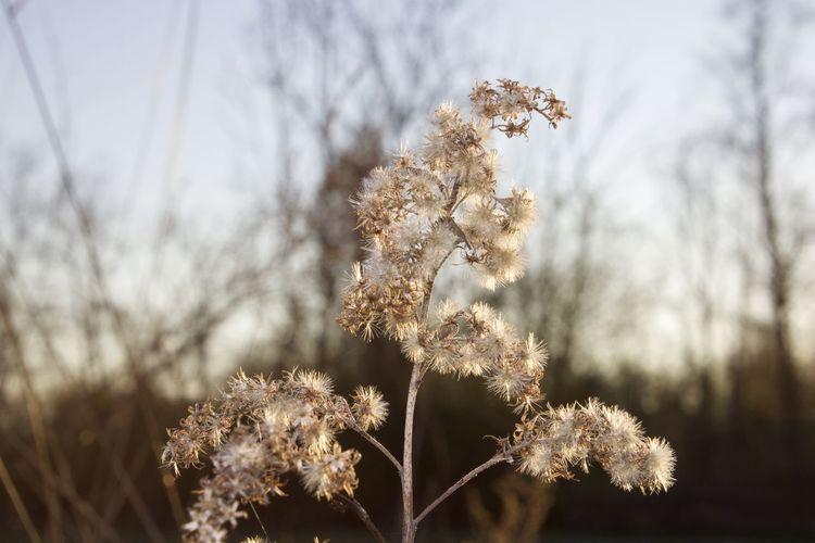 Fragility Plant