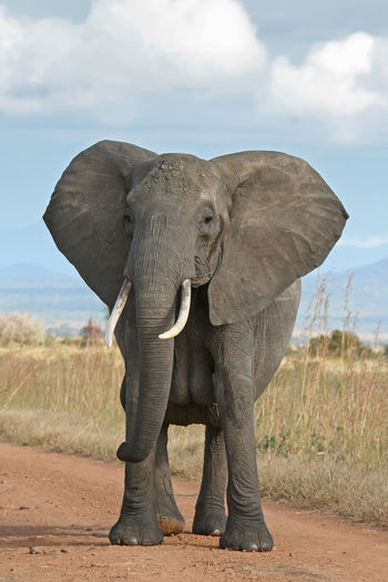 Low angle view of elephant standing on field against sky