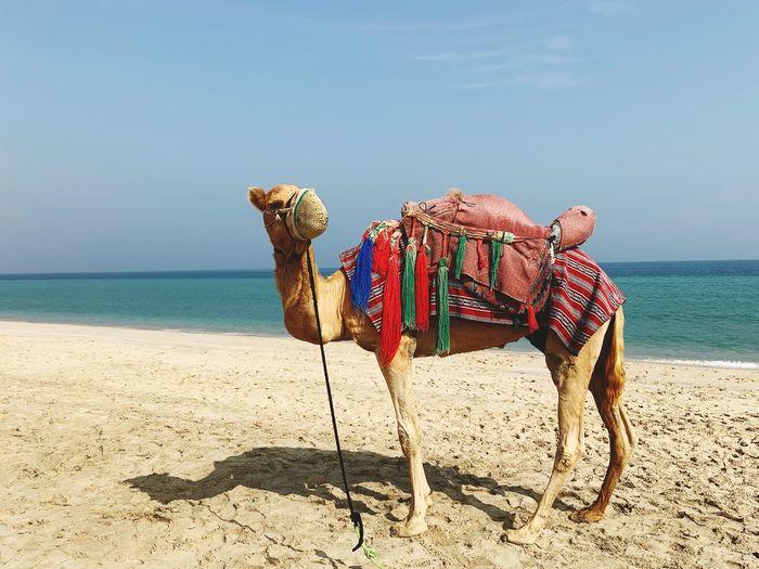 EyeEm Selects Land Beach Sand Water Sea Sky Nature Horizon Over Water Animal Animal Themes Tranquil Scene