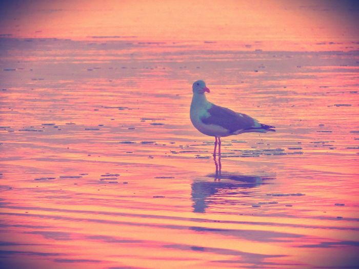 Birds of the Sea.. Sweet December ♡ IPhoneography From My Point Of View Sun_collection Life Is A Beach EyeEm Nature Lover Landscape_Collection Beachphotography EyeEm Birds Reflection