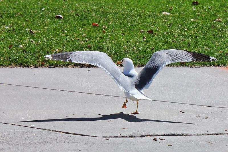 View of bird on pavement next to grassy area