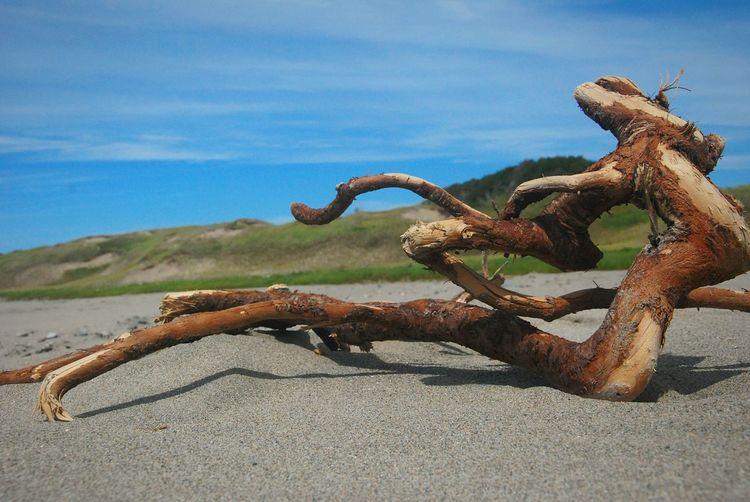 Driftwood Natural Beauty Western Brook Beach Parks Canada Gros Morne Beach Tangled Newfoundland Canada Fine Art Photography