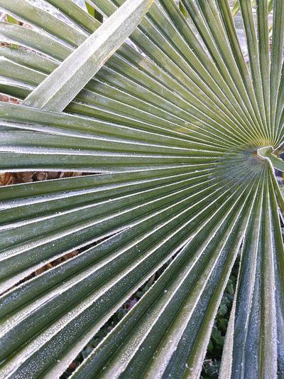 Full frame shot of palm tree