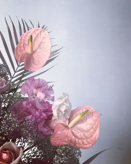 Flowering Plant Flower Plant Freshness Beauty In Nature Fragility Vulnerability  EyeEmNewHere