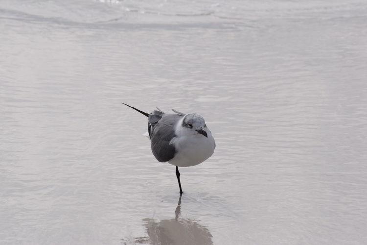 Balancing bird