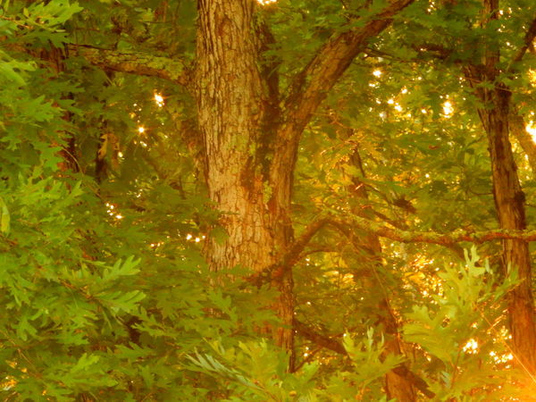 East Tennessee Mountain Sunset (edit-free) ~justjennifer @ TruthIsBeauty Photographic Art Beauty In Nature Branch Bright Bright Colors Brown Green Color Idyllic Leaf Lens Flare Lensflare Lush Foliage Nature Orange Color Outdoors Scenics Tranquility Tree Tree Trunk