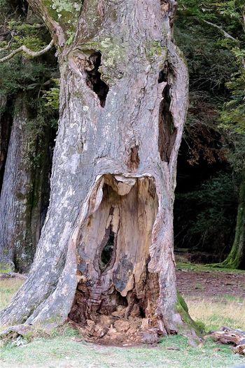 Tree Scary Face