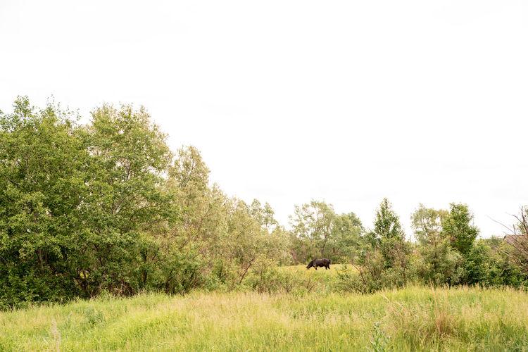 View of giraffe on grassy field