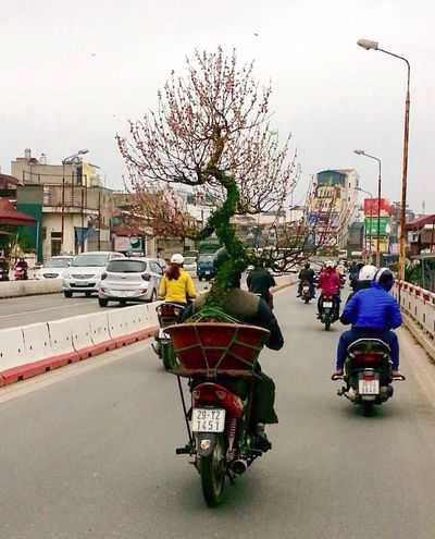 Shot From The Passenger Seat Only In Vietnam Opportunist The Things You See  Delivery Man Vietnam Street Photography Hanoi, Vietnam Tết Delivery Service Xe Om Pot Plant Cherry Blossom Cherry Blossom Tree