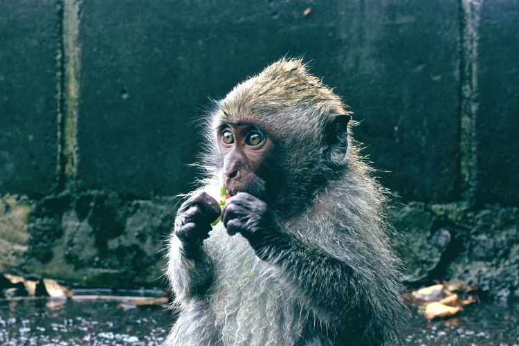 Portrait of monkey eating outdoors