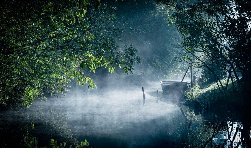 Mist on the
