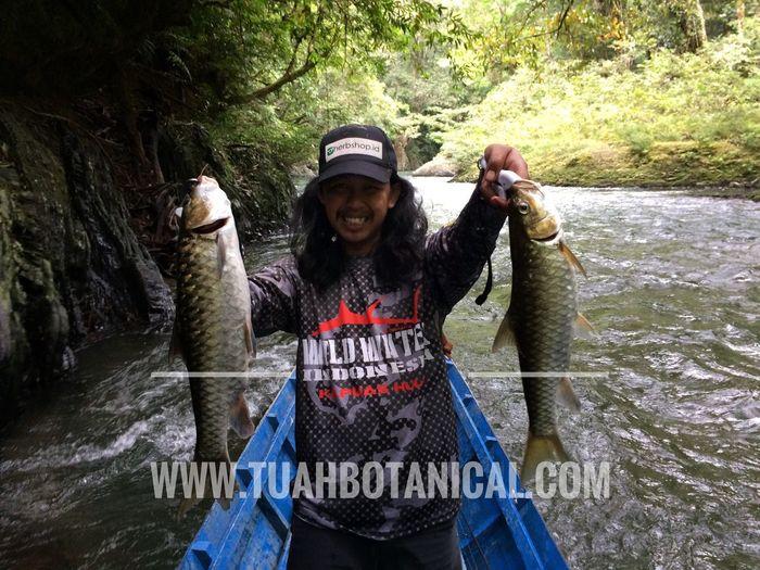 Fishing Fish Shimanocaius Shimanocatana Kratom