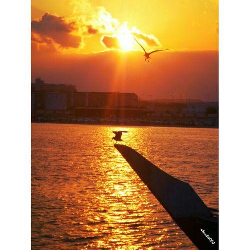 تصويري ريسوت الميناء ظفار سلطنة عمان Hi!