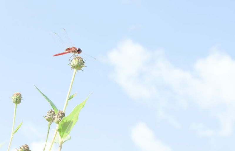 Dragonflies Dragonfly Dragonfly Nature Insects Dragonfly_of_the_day Dragonfly💛 Insect Nature Animal Themes Scenics Beauty In Nature No People Outdoors One Animal Close-up Tranquil Scene Freshness Flowers,Plants & Garden Flower Head Flowers Flower Domestic Animals Animal Animals Nature Photography