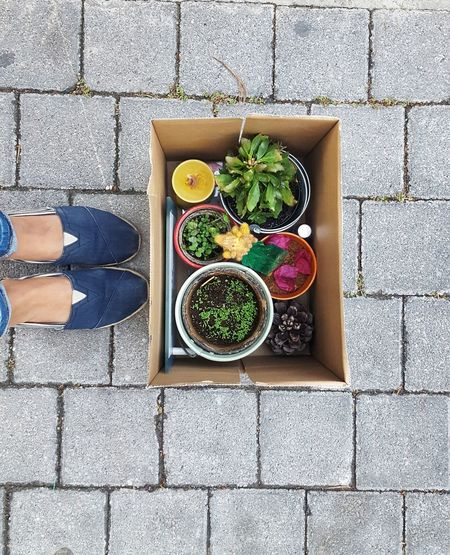 Moving New Job  Relocation Fired EyeEmNewHere EyeEm Selects Packing Leaving Stuff Office Office Supply Decoration Plants Looking Down Legs Female A New Beginning Healthy Lifestyle Directly Above High Angle View Salad Variation