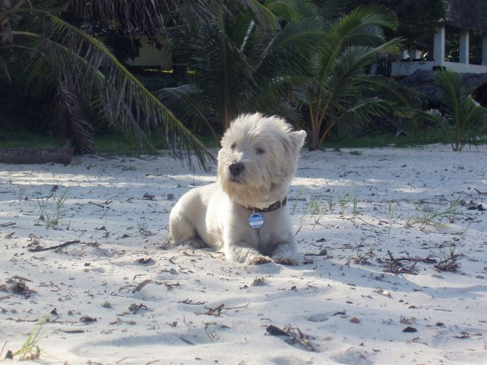 At Tiwi Beach