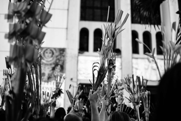 Palm Sunday. Bnw Bnw_greatshots Bnwphilippines Bnw_of_our_world Bnwphotography Bnwmood Streetphotography Philippines Igersbnw Manila Igers Bnwportrait 35mm Repent Wheninmanila Nikond3300 Palmsunday2018 Street Nikon Streetsofmanila Lentenseason Igersmanila Holyweek2018 #streetchildren #Child Qc Camera Film Growing Plant Life Young Plant Negative Ivy Toadstool Film Reel Instant Camera Flower Head Stem Pollen Blooming Fungus Mushroom Cattail Cosmos Flower Dahlia Visual Creativity Focus On The Story The Street Photographer - 2018 EyeEm Awards The Photojournalist - 2018 EyeEm Awards The Creative - 2018 EyeEm Awards