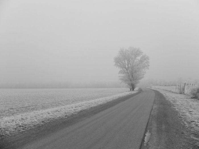 Winter Cold Temperature Road Landscape Snow Rural Scene Field Outdoors Tree The Way Forward Nature No People Beauty In Nature Bare Tree Austria Parndorf