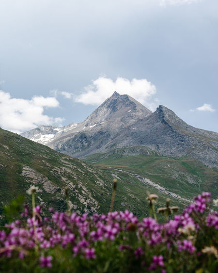 Scenic view of mountains with flowers in foreground