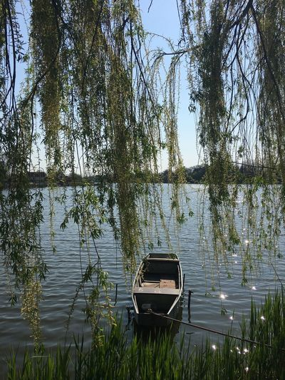 Willow branches against boat moored on lake