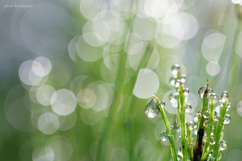 おはようございます(^o^)/『梅雨間の煌めき』 Sony α♡Love しずくふぇち キラキラ Macro Photography EyeEm Nature Lover EyeEm Best Shots Water Drops Plants 🌱 Hello World *CHIE*