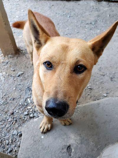 Close-up high angle portrait of dog