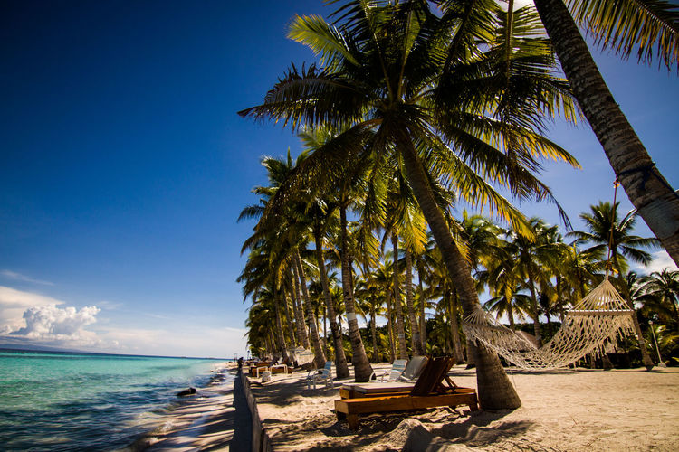 Beach Beauty In Nature Blue Clear Sky Day Horizon Over Water Nature No People Outdoors Palm Palm Tree Phillipines Postcard Scenics Sea Sky Summer Sunlight Tranquil Scene Tranquility Travel Travel Destinations Tree Vacations Water Traveling Home For The Holidays