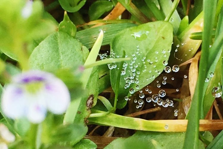 Morning Moisture Water Drops Spider Webs Morning Drop Leaf Water Green Color Nature Freshness Plant Beauty In Nature