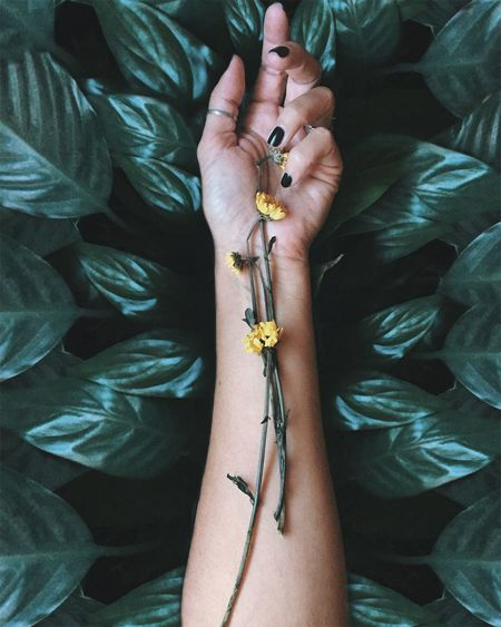 High angle view of woman's arm and dried flowers