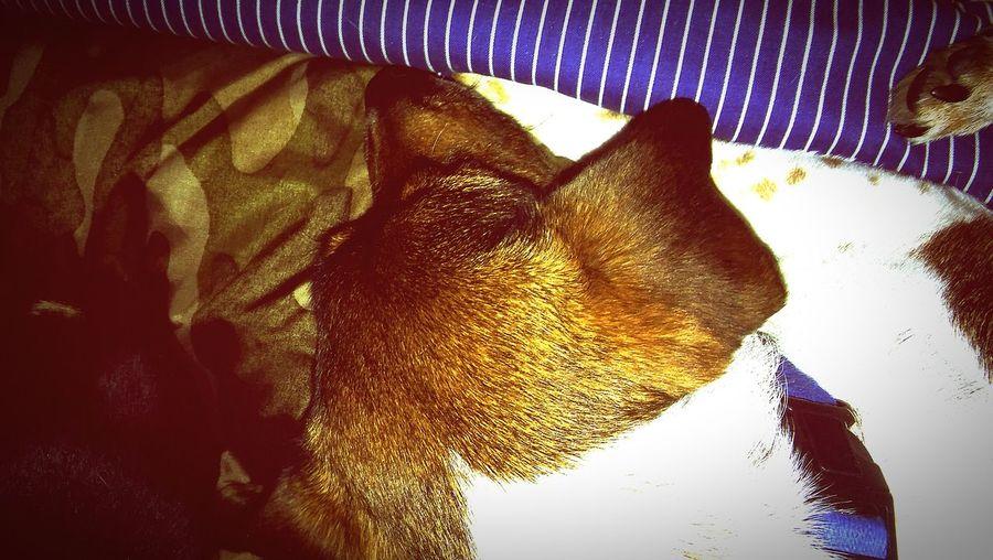 Dog Napping First Eyeem Photo