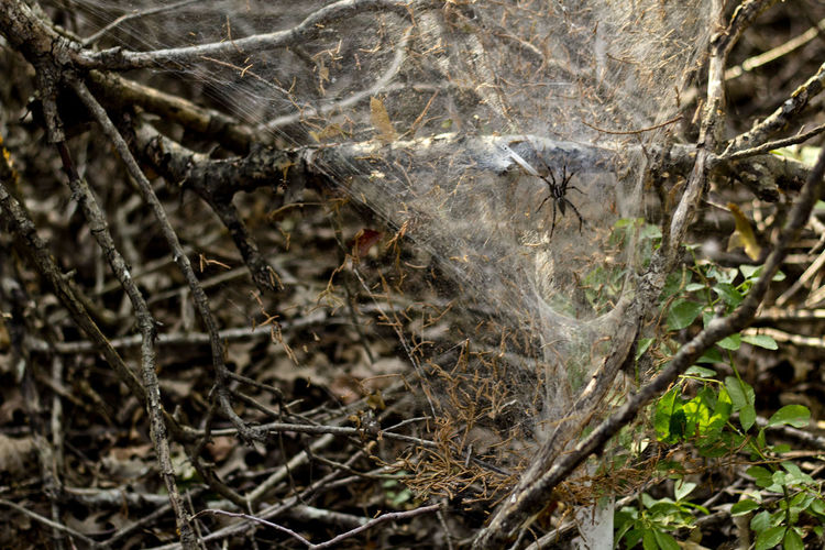 A funnel web spider in its web. Arachnid Arachni-therapy Hikingadventures Hiking Photography