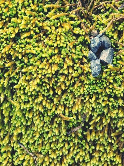 Wild moss Green Moss & Lichen Outdoor Photography Outdoors Nature No People Grey Rocks Rocks And Moss