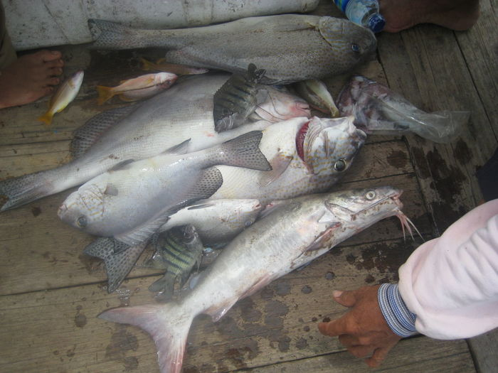 Day Finger Fish Fishing Industry Food Food And Drink Freshness Hand Healthy Eating High Angle View Holding Human Body Part Human Hand One Person Raw Food Real People Seafood Vertebrate Wellbeing
