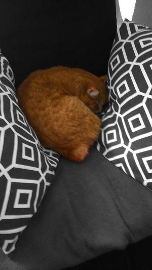 Katze Miezekatze Sleeping Cat Sweet♡