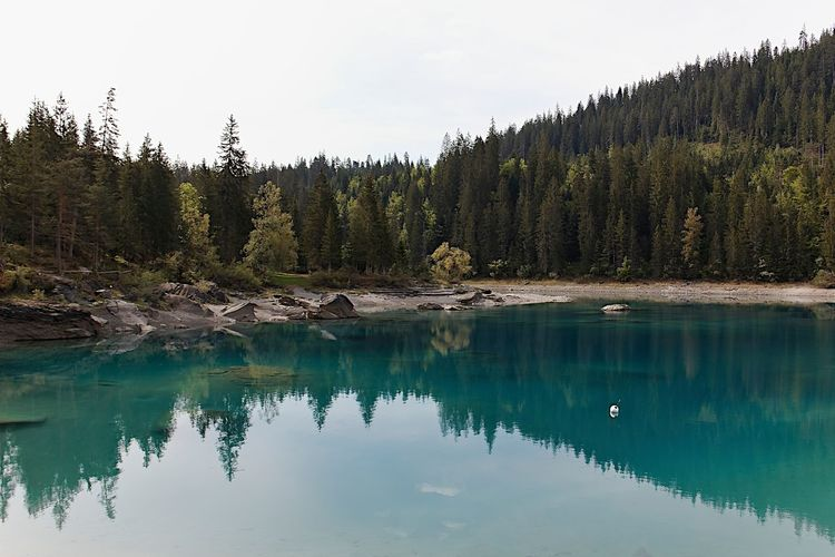 Beauty In Nature Coniferous Tree Day Forest Growth Idyllic Lake Nature No People Non-urban Scene Plant Reflection Reflection Lake Remote Scenics - Nature Sky Tranquil Scene Tranquility Tree Turquoise Colored Water Waterfront
